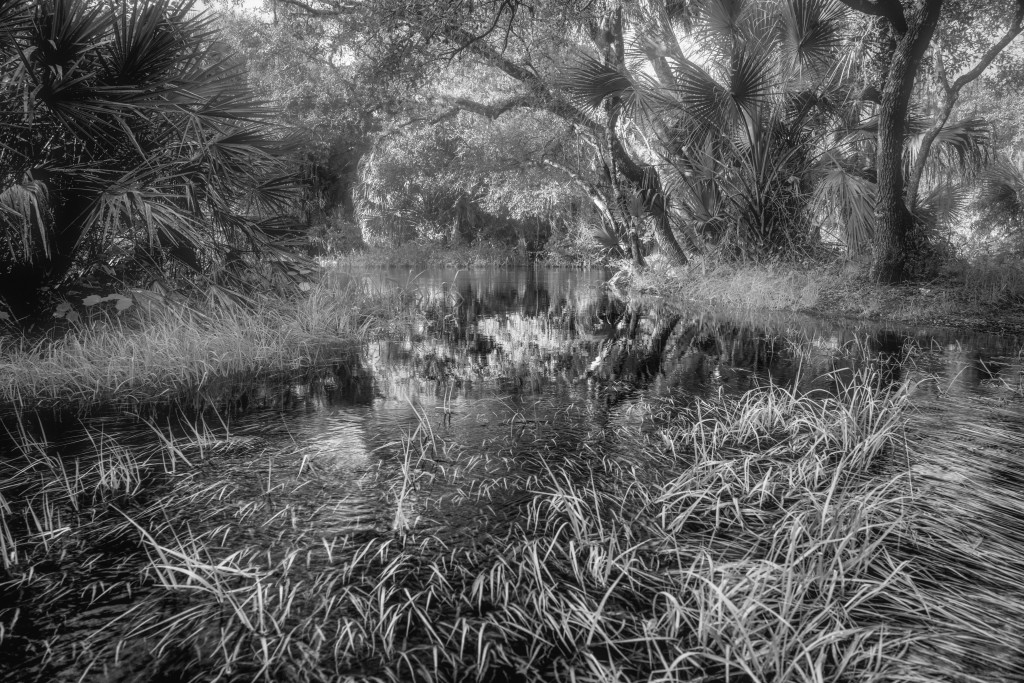 Overflowing water from the river flattened the grasses across a submerged trail
